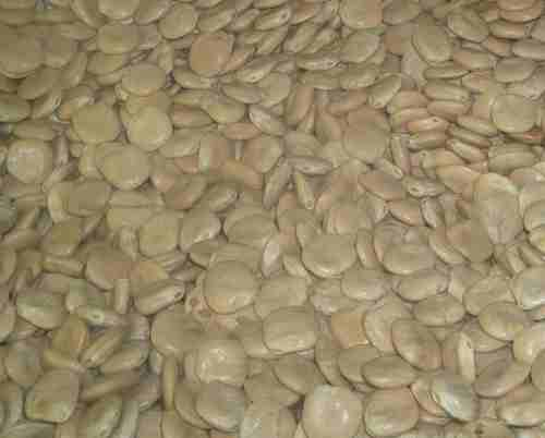 Lupini beans (loose, dry) 1 lb.